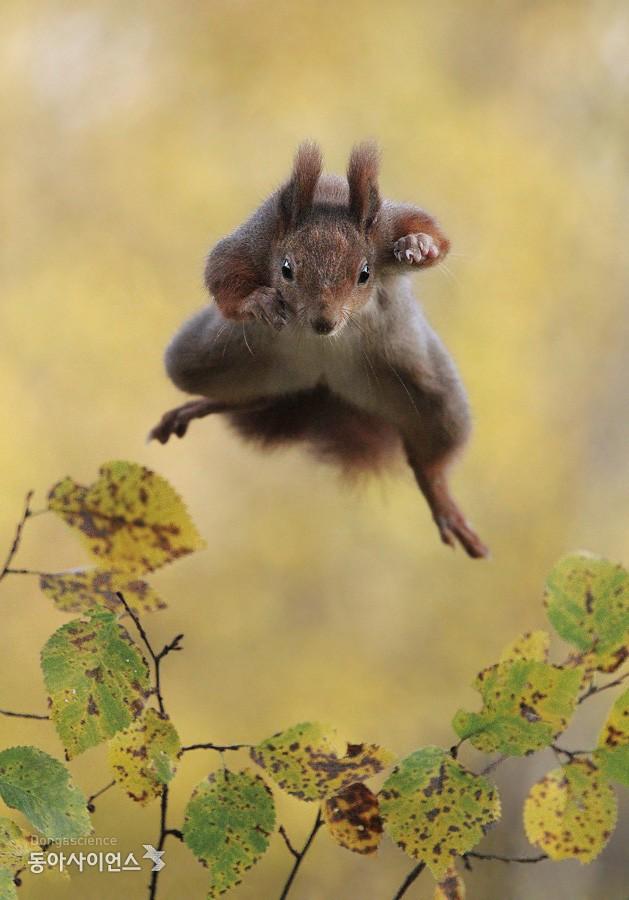 (c)Julian Rad/Comedy Wildlife Photography Awards 제공